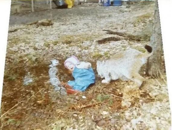 Животные: Рисковые родители...
