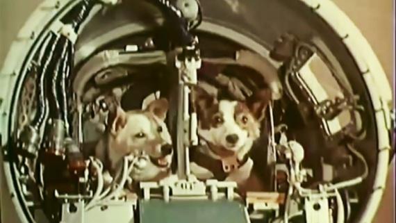 Даты: Белка и Стрелка - 56 лет полету