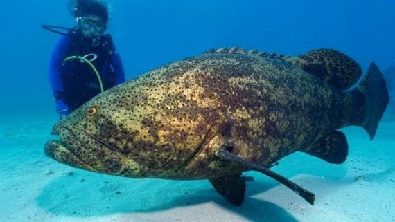 Интересное: Опасные рыбы