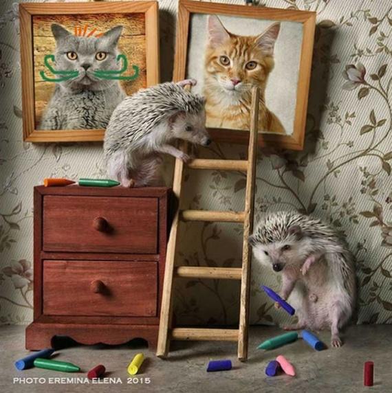 Картинки: Как живут ёжики