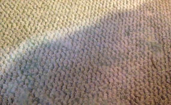 Полезные советы: Какие вредители живут в вашем ковре и как с ними бороться