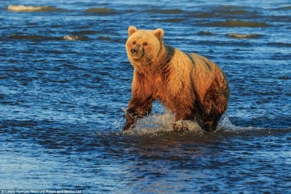 Животные: Медведи на рыбалке