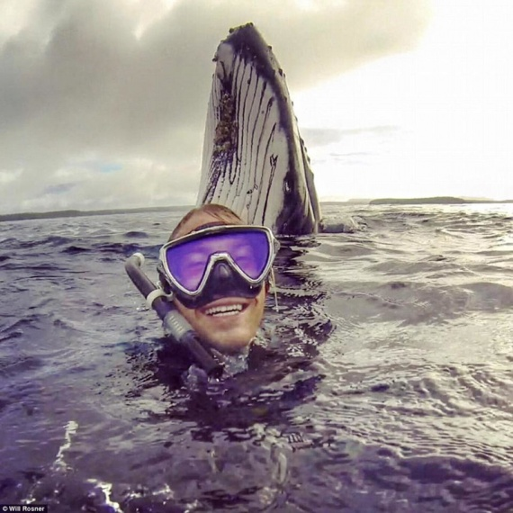 Общество: Селфи с китом
