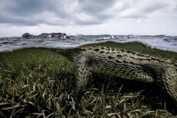 Животные: Прогулка с крокодилами