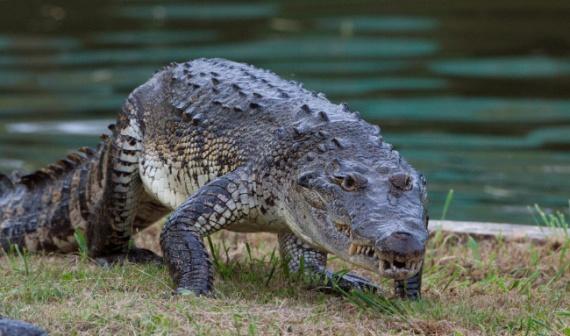 Животные: Самые большие крокодилы