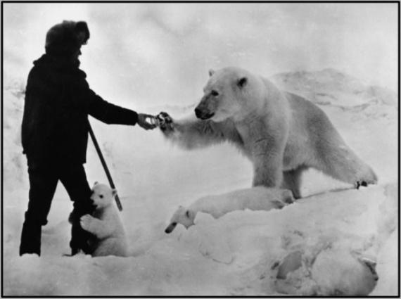 Животные: Если вам встретился белый медведь