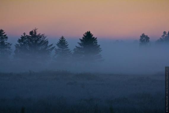 Природа: Беловежская Пуща