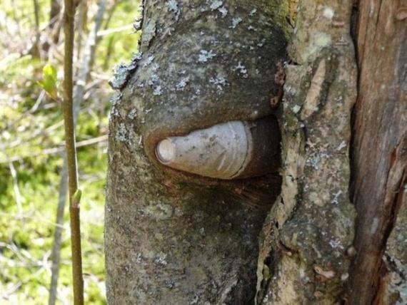 Природа: Деревья и предметы