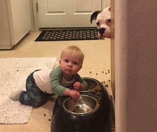 Юмор: Не видишь - мы кушаем!