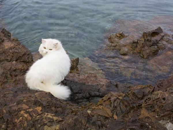 Животные: Кошки непохожи на людей