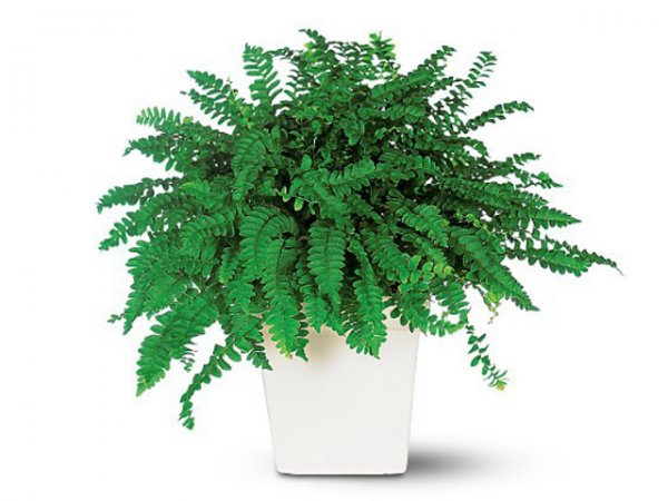 Полезные советы: Растения, очищающие воздух