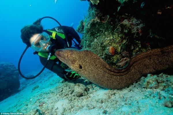 Природа: Опасный океан