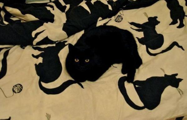 Животные: Найди котэ