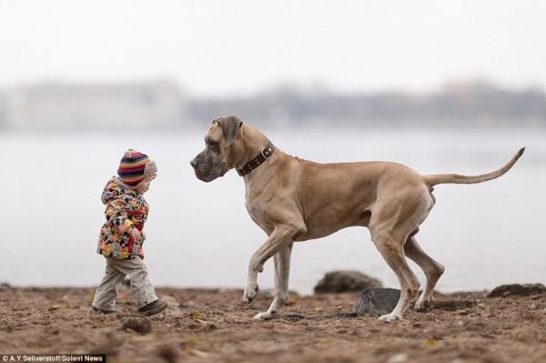 Животные: Дети и собаки