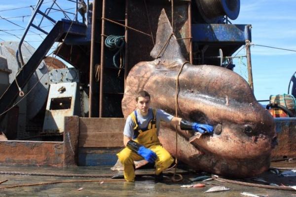 Интересное: Морские обитатели