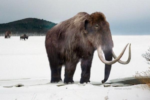 Животные: Интересные факты о мамонтах