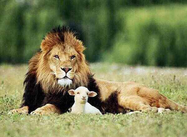 Животные: Да не приёмный ты!
