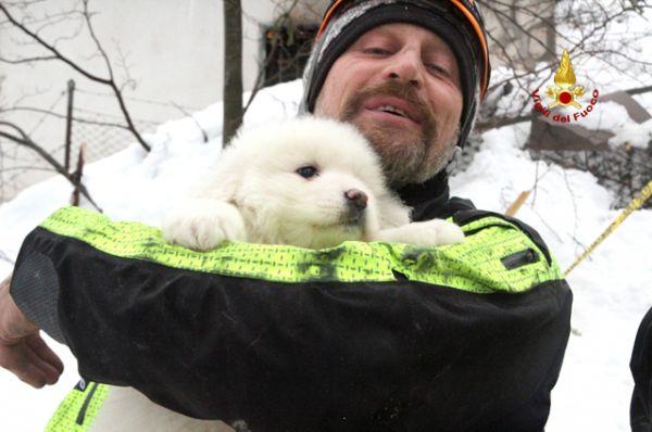Происшествия: Из заваленного лавиной отеля в Италии спасли щенков
