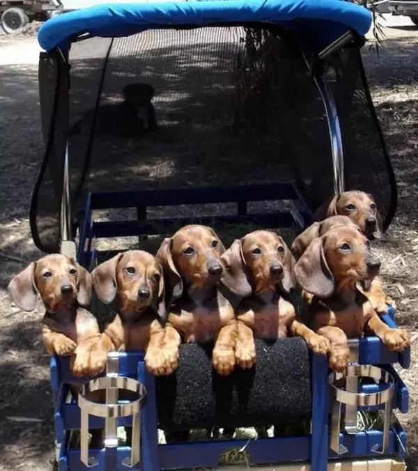 Животные: Мамаша шестерых щенят