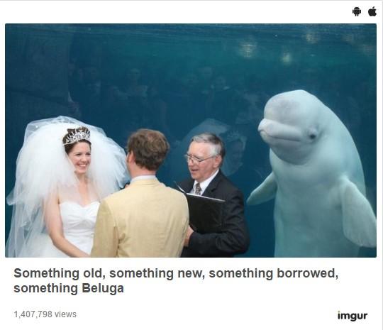 Картинки: Новый мем с дельфином