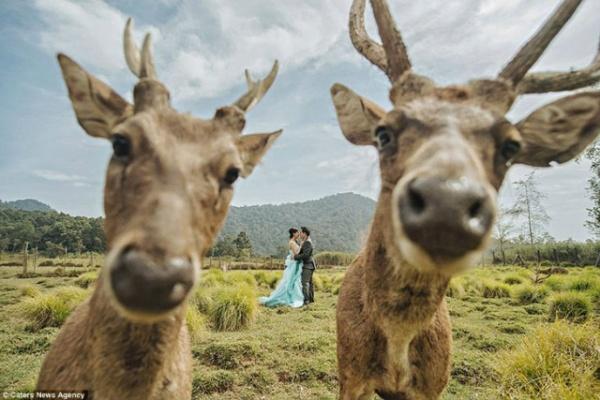 Юмор: Свадебные фото