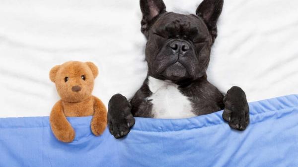Животные: Что снится собакам?