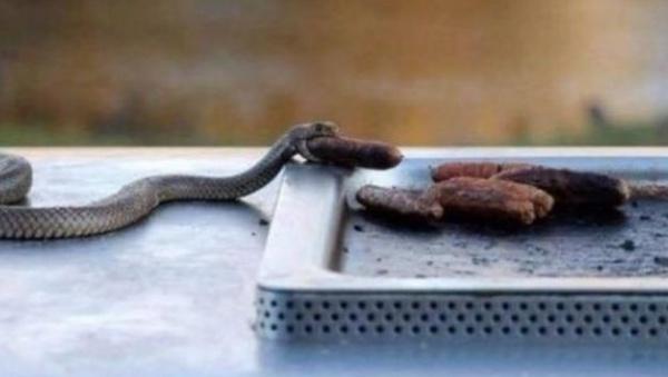 Животные: Ты приползла совсем нежданно...