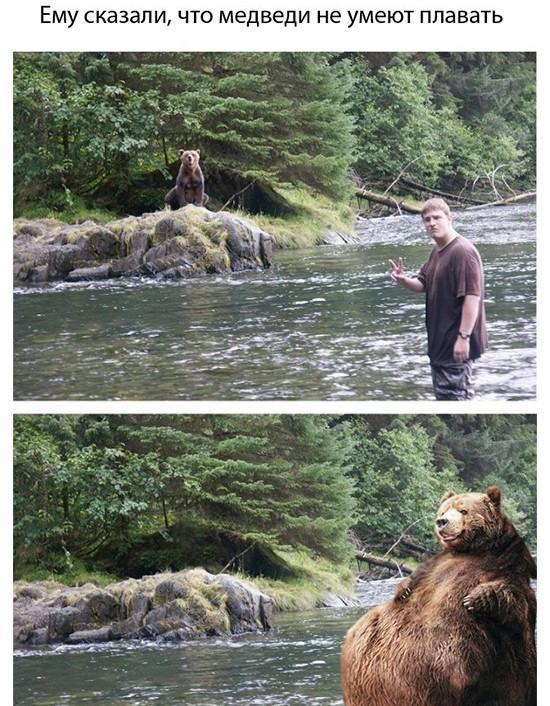 Животные: Если вы встретили медведя