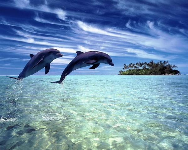 Животные: Самые красивые животные