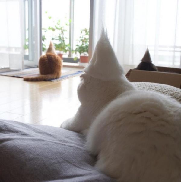 Животные: Кошачьи шапочки