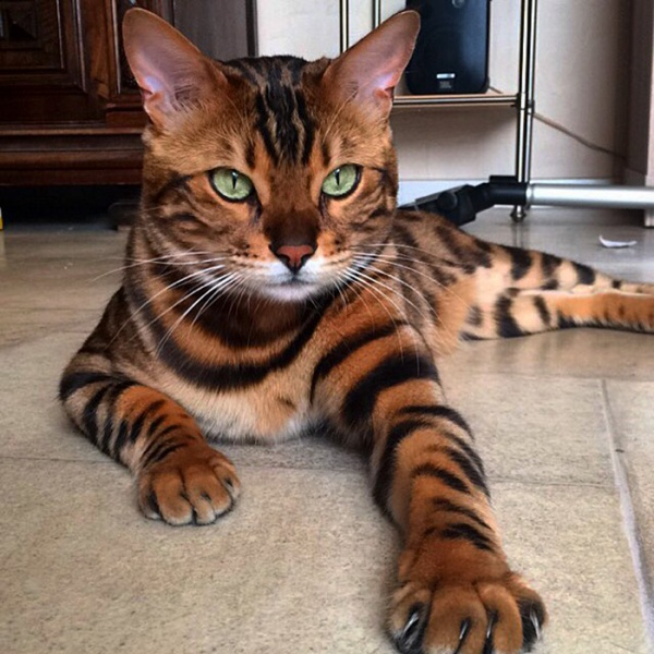 Животные: Кошки не похожи на людей
