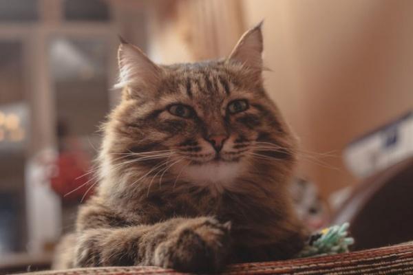 Животные: Как человек приручил кошку