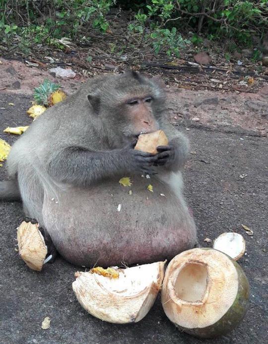 Животные: Жируху посадят на диету
