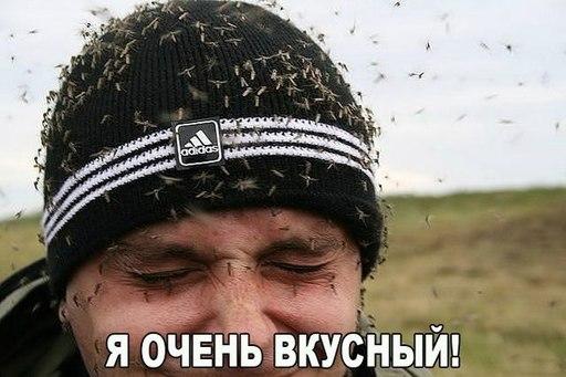Полезные советы: Налетели комары. Что делать?