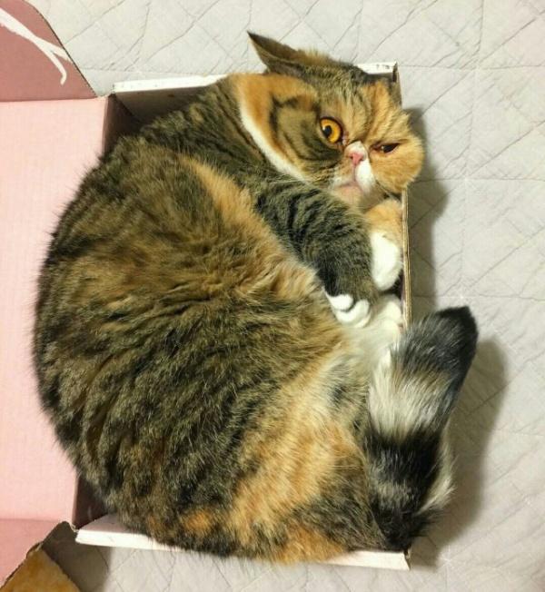 Животные: Купите мне новую коробку!