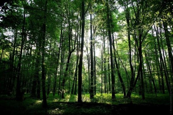 Политика: Польша хочет убрать Беловежскую пущу из списка природного наследия ЮНЕСКО