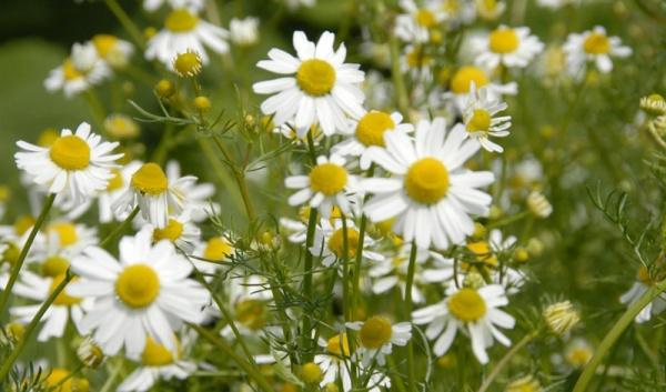 Здоровье: Природные антисептики