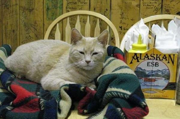 Животные: Умер мэр города Талкитна, штата Аляска