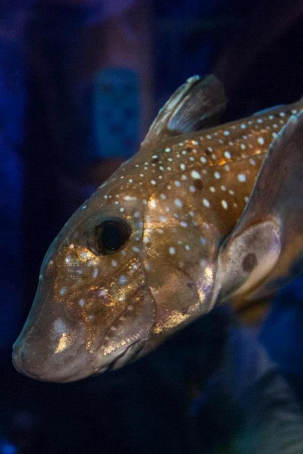 Животные: Чудо-Юдо Рыба-Кит