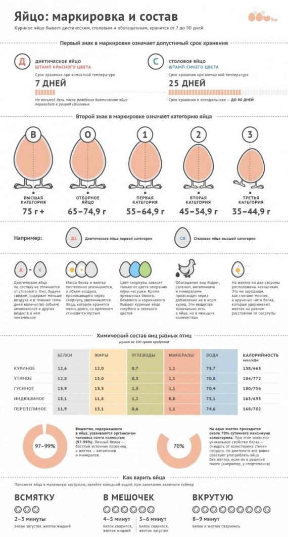 Полезные советы: Как разобраться в куриных яйцах