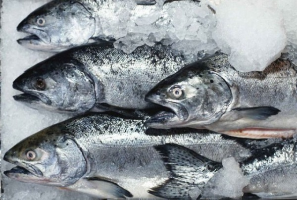 Новости: Покупатели рыбы перестанут платить за лед