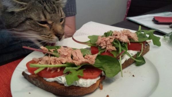 Животные: Коты в законе
