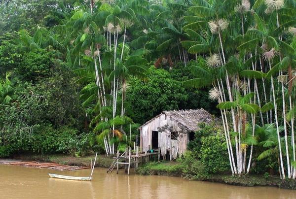 Путешествия: Прогулка по Амазонке