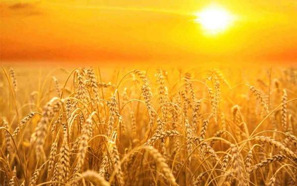 Экономика: Блог djamix: Россия — зарождающаяся сверхдержава в области мировых продовольственных ресурсов: с июля 2016 года по июнь 2017 года страна экспортировала больше, чем вся Европа