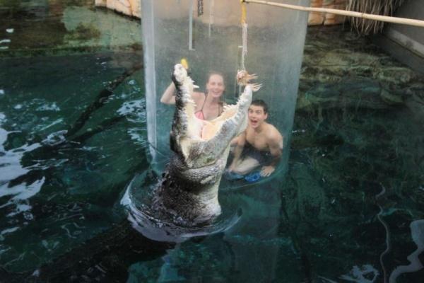Животные: Поплавать с крокодилом