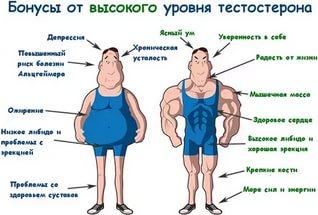 Здоровье: Повышаем тестостерон
