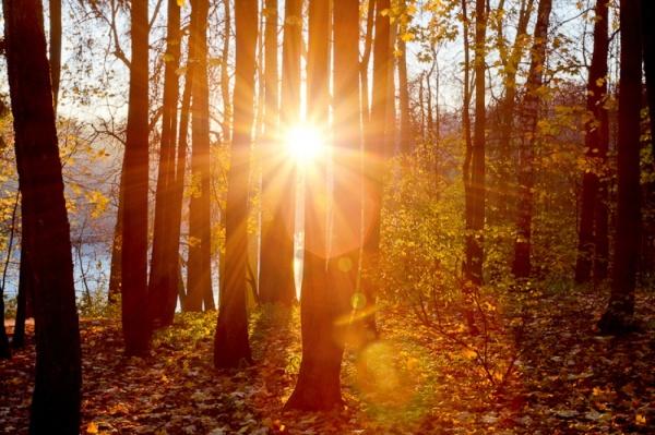 Природа: Золотая осень