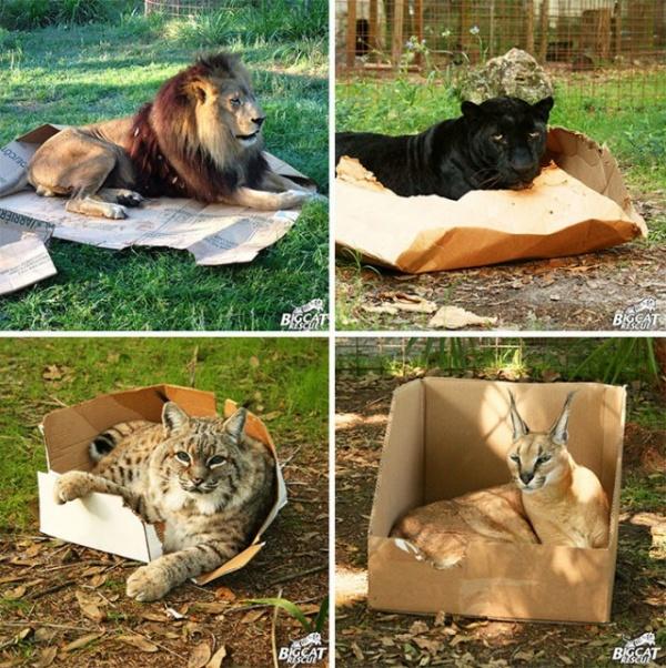 Животные: Котэ