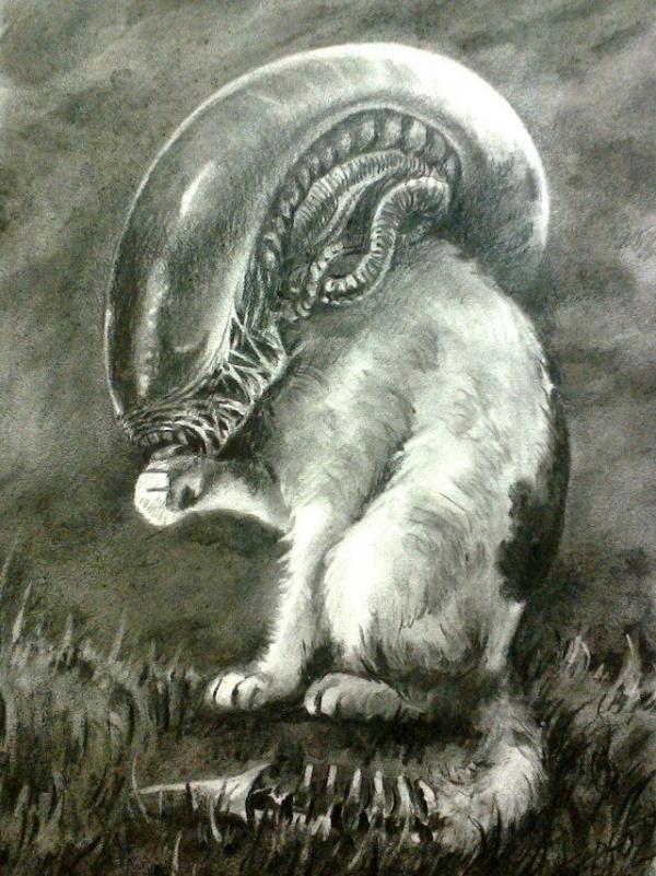 Картинки: Если бы Чужой и Хищник были домашними животными