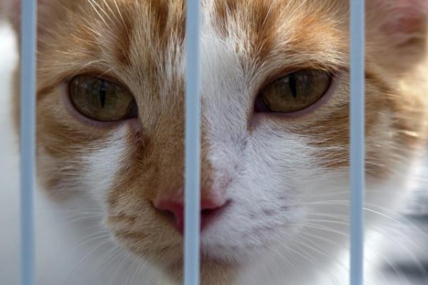 Право и закон: В Госдуму внесен закон об уголовных сроках за жестокое обращение с животными
